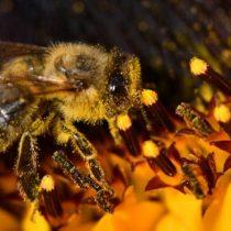 Investigadores explican por qué han muerto 500 millones de abejas en Brasil en solo 3 meses