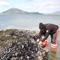 """Científicos realizarán inédito estudio de """"marea roja"""" en la Patagonia"""
