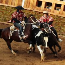 Aunque no les guste a los veganos, el Rodeo Chileno es deporte reconocido
