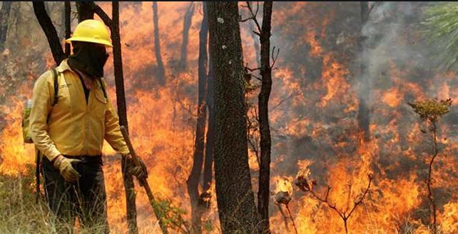 Ad portas de la temporada de incendios forestales Conaf vive su propio siniestro: cambian jefe cada dos meses