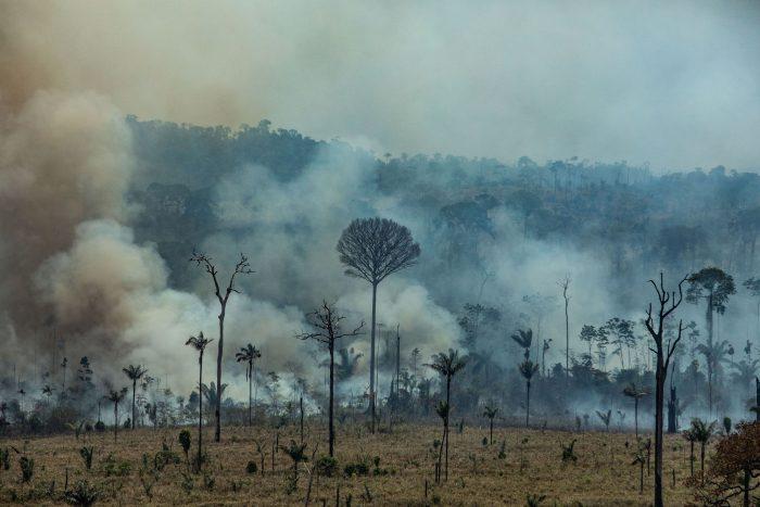 Dos tercios del bosque tropical ha sido destruido o maltratado en el mundo