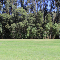 Fonda en Parque Cachagua: Presentan recurso de protección contra fiesta de 6 días en Zapallar