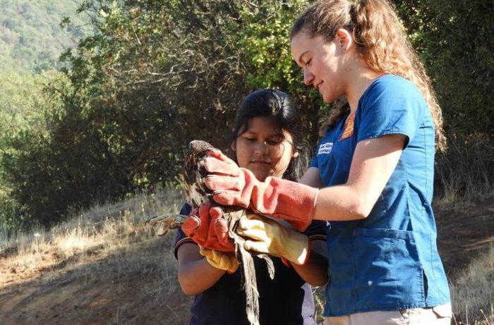 Educar sobre fauna silvestre para concientizar sobre la conservación de animales