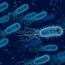 Físicos chilenos crean micromotores biológicos que permitirían dirigir el movimiento de las bacterias