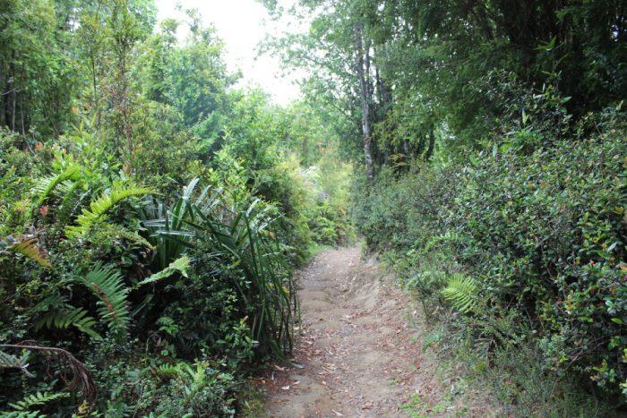 El triple problema socioambiental de Chiloé: ¿dónde está el Estado?