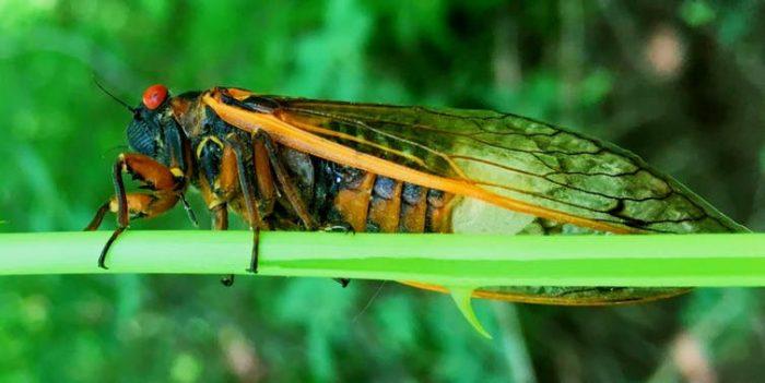Naturaleza gore: Hongos alucinógenos, anfetaminas y orgías en insectos zombis
