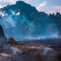Incendios en el Amazonas: quién se beneficia de la explotación económica de la Amazonía brasileña