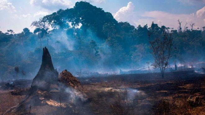 Los incendios en Brasil amenazan la seguridad de EE.UU.