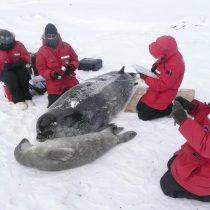 Emergencia climática en Antártica: aguas costeras en el Mar de Ross bajo inhóspitas condiciones