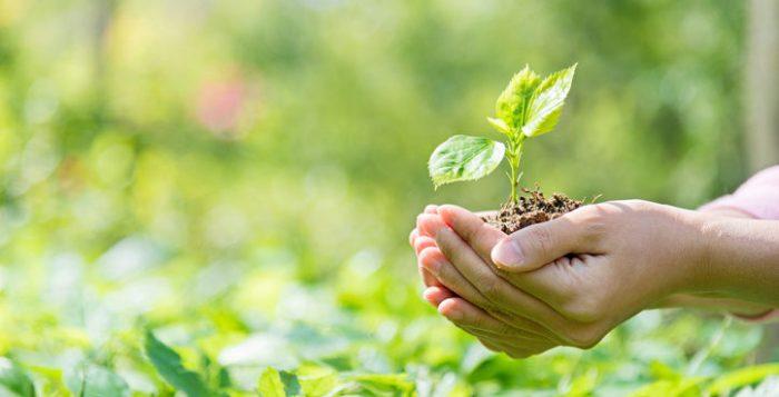 Presentan nuevas publicaciones de apoyo a docentes sobre Educación Ambiental