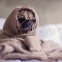 Señales que alertan que un perro podría estar estresado