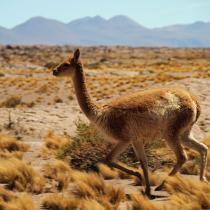 Cambio climático también amenaza a la industria del turismo