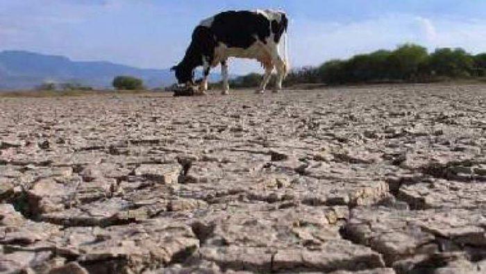 Emergencia climática y desenfoque político