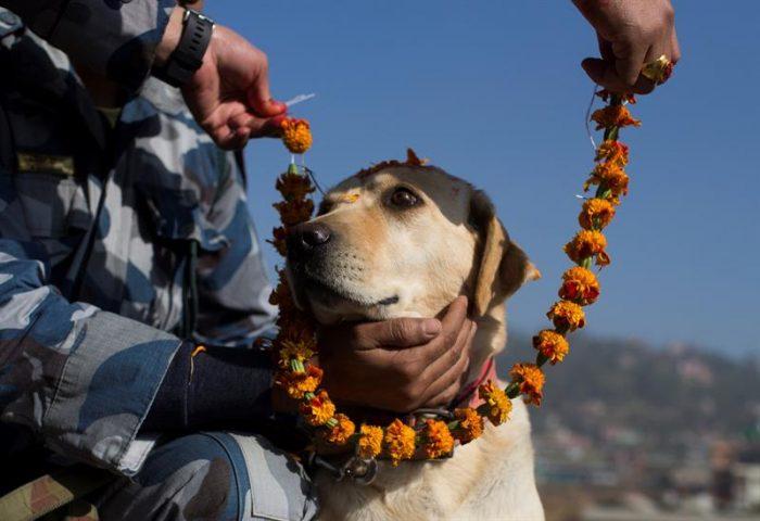 Por qué Nepal honra a los perros en la fiesta de Tihar