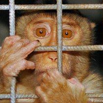 Experimentos con animales: ¿indignación hipócrita?