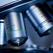 Usan gusanos para identificar los puntos débiles de células tumorales humanas