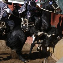 Intendencia Metropolitana autoriza marcha contra el rodeo