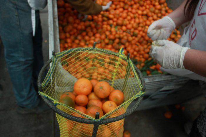 Red de Alimentos triplica el rescate de frutas y hortalizas destinadas a la población más vulnerable en Chile