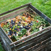 Residuos orgánicos: el valor del compostaje y el vermicompostaje