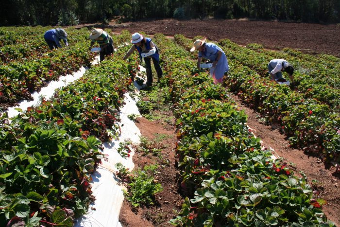 El rol de las mujeres en el mundo cooperativo agrícola