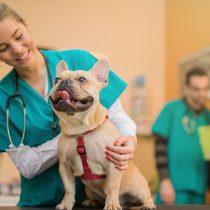 Marihuana para mascotas: ¿es recomendable su uso medicinal en perros y gatos?