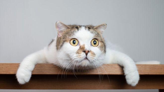 ¿Por qué creemos que los gatos son menos cariñosos y amigables que los perros?