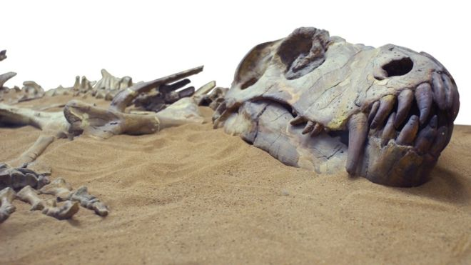 Los 8 animales extintos que nunca más volveremos a ver (y uno que volvió de la muerte)