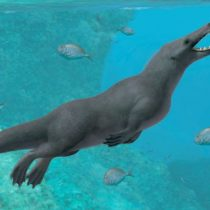 El extraordinario fósil de Perú que revela cómo las ballenas con cuatro patas llegaron a Sudamérica