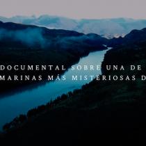 """""""Zifio, el último viaje"""": documental describe el rol de la ciencia en la investigación de cetáceos en Chile"""