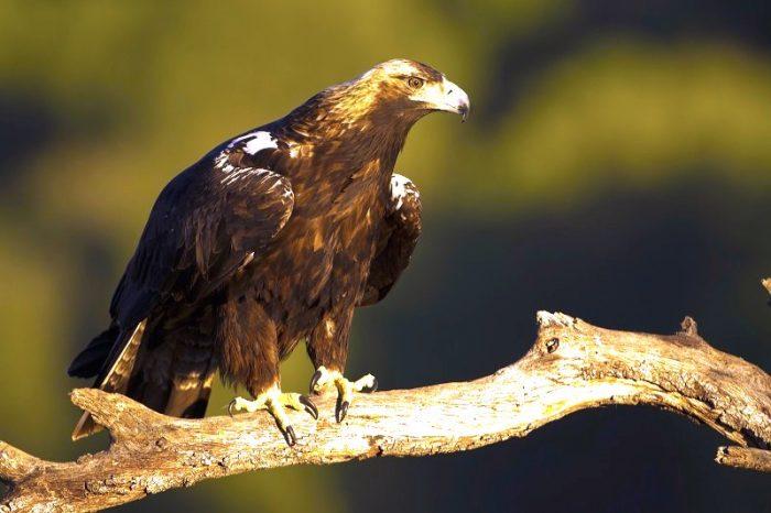 Daño al sistema inmune y desplazamiento geográfico: los efectos del cambioclimático en las aves