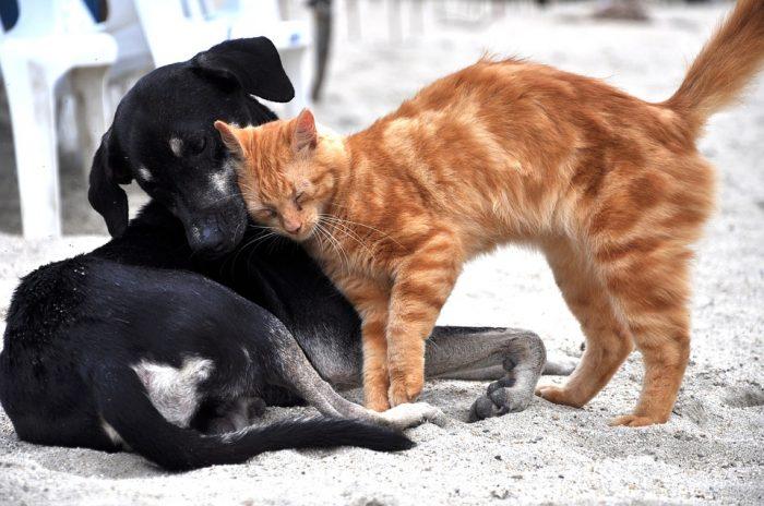 #NoSonMuebles: buscan que los animales sean considerados en la nueva Constitución