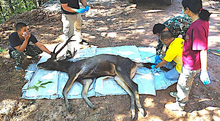 Tailandia: hallan cadáver de ciervo con siete kilos de plástico en su estómago
