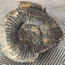 Manifestantes lanzan a Carabineros un fósil de 66 millones de años