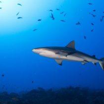 Por qué los océanos se están quedando sin oxígeno y qué significa esto para la vida marina