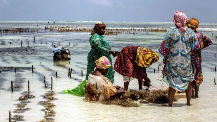 Las algueras de Zanzíbar: feminismo e innovación a orillas del Índico