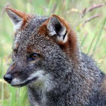 Cada año peor: 766 especies se encuentran amenazadas en Chile