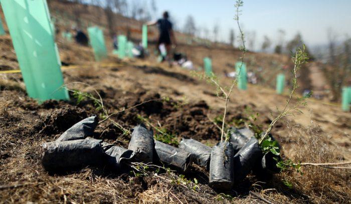 Operaciones forestales sostenibles