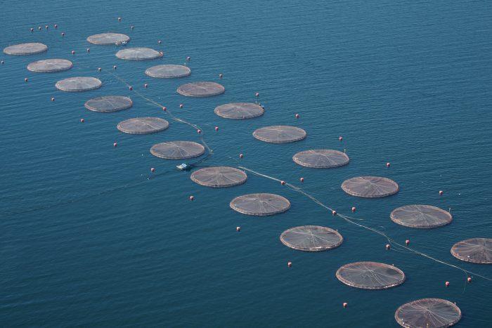 FNE acusa de colusión a productoras de alimentos de salmón y pide multas millonarias