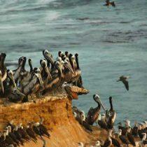 Conservación de la biodiversidad en serio