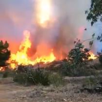 Decretan Alerta Roja en El Quisco por incendio forestal en el sector de El Totoral