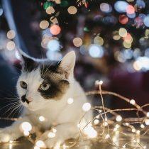 Veterinarios entregan recomendaciones para pasar fiestas con mascotas