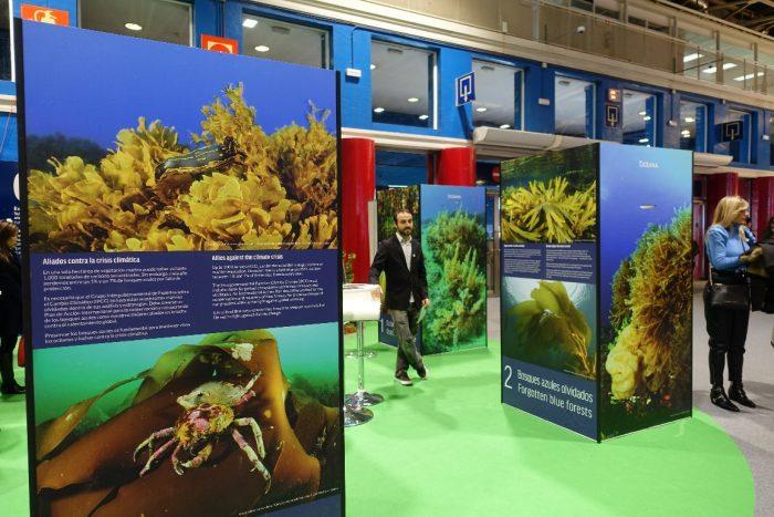 Oceana reclama plan de acción mundial para proteger los bosques de algas
