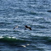 Borradores documento COP25 reconocen la importancia crítica de los océanos