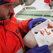 Primer estudio en su tipo analizará fecas de kril, importante amortiguador del cambio climático en el Océano Austral