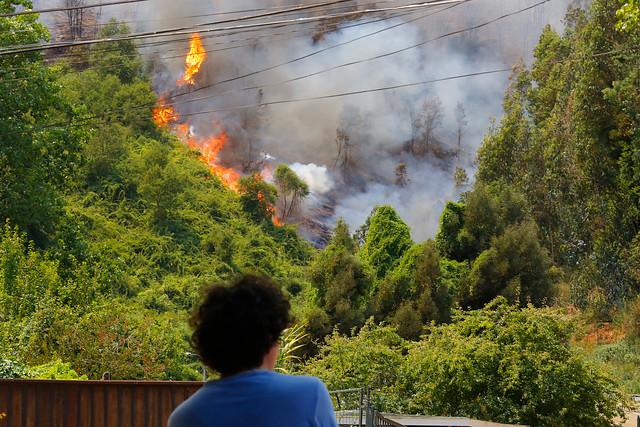 Incendios forestales: Onemi mantiene alerta roja en Chiguayante y la extiende a Hualqui, Santa Juana y Curanilahue