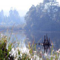 La gran mentira y la gran verdad sobre el medio ambiente
