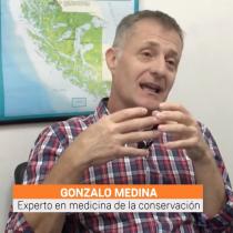 Homo Science: Gonzalo Medina-Vogel, médico de la conservación, y la gran pérdida de biodiversidad de la Patagonia