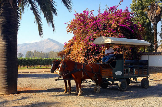 Viña ofrece un 20% de descuento en sus tours a visitantes nacionales