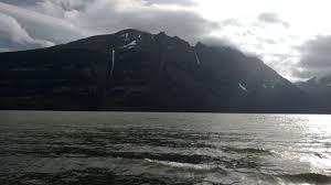"""""""Crimen medioambiental"""": senadora Goic interpela a Conaf por plantación de pinos a la entrada de dos parques nacionales en Magallanes"""