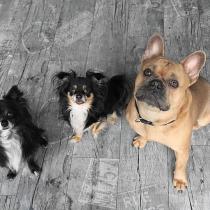 Curso online para todo público por una tenencia responsable de mascotas